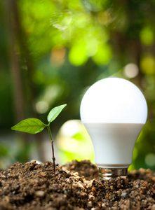 Die Glühbirne leuchtet und neben ihr wächst eine Grünpflanze. Sie wachsen aus der Biomasse heraus.