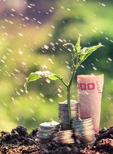Das Bild zeigt eine Grünpflanze welche zwischen Geldmünzen und einem Geldschein aus dem Boden wächst.